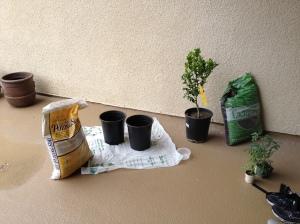 Plantering pågår