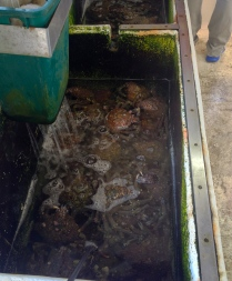 Krabbor i badet